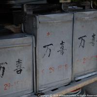 kamezaki-3.jpg