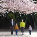 sakura20021.jpg